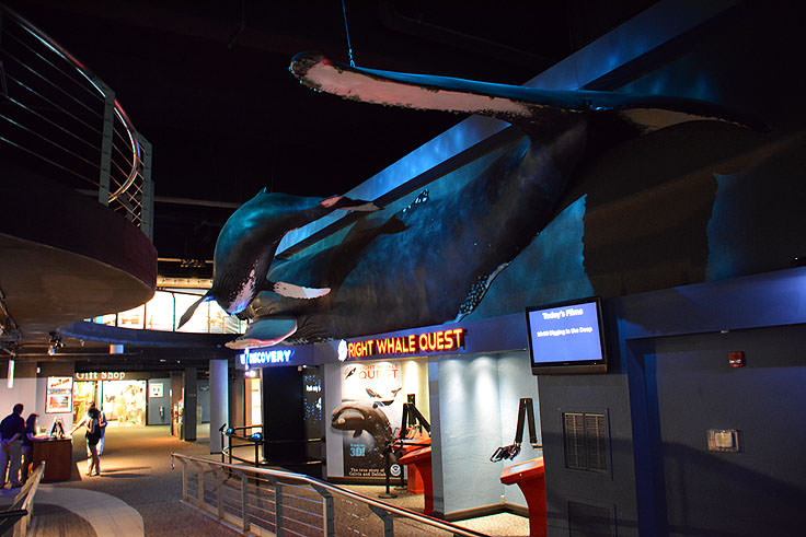 nc aquarium at fort fisher carolinabeach com